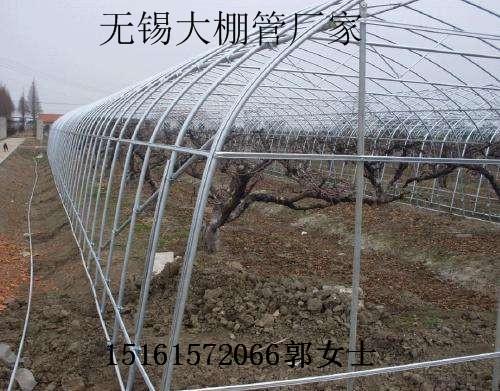浙江杭州临安水果大棚管