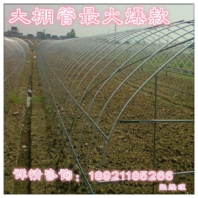 安徽滁州南谯区水果大棚管