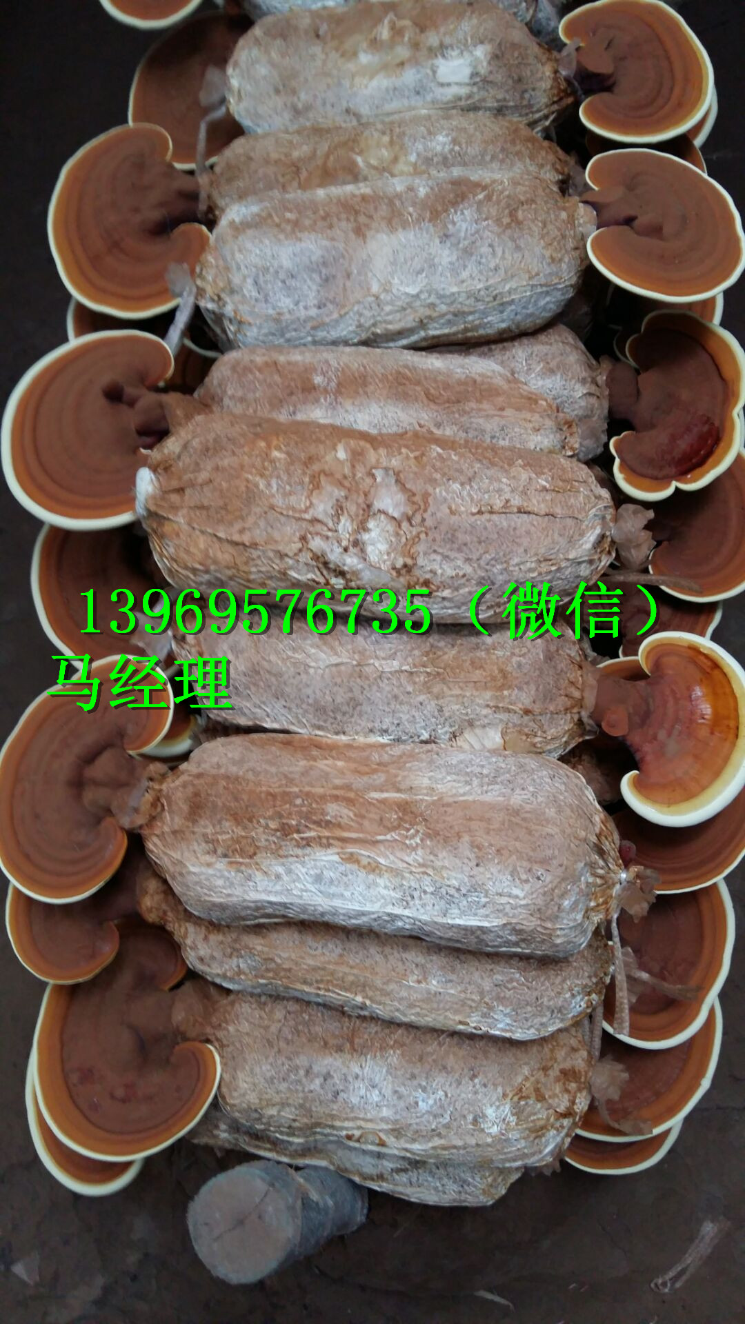 梅州灵芝破壁孢子粉厂家地址