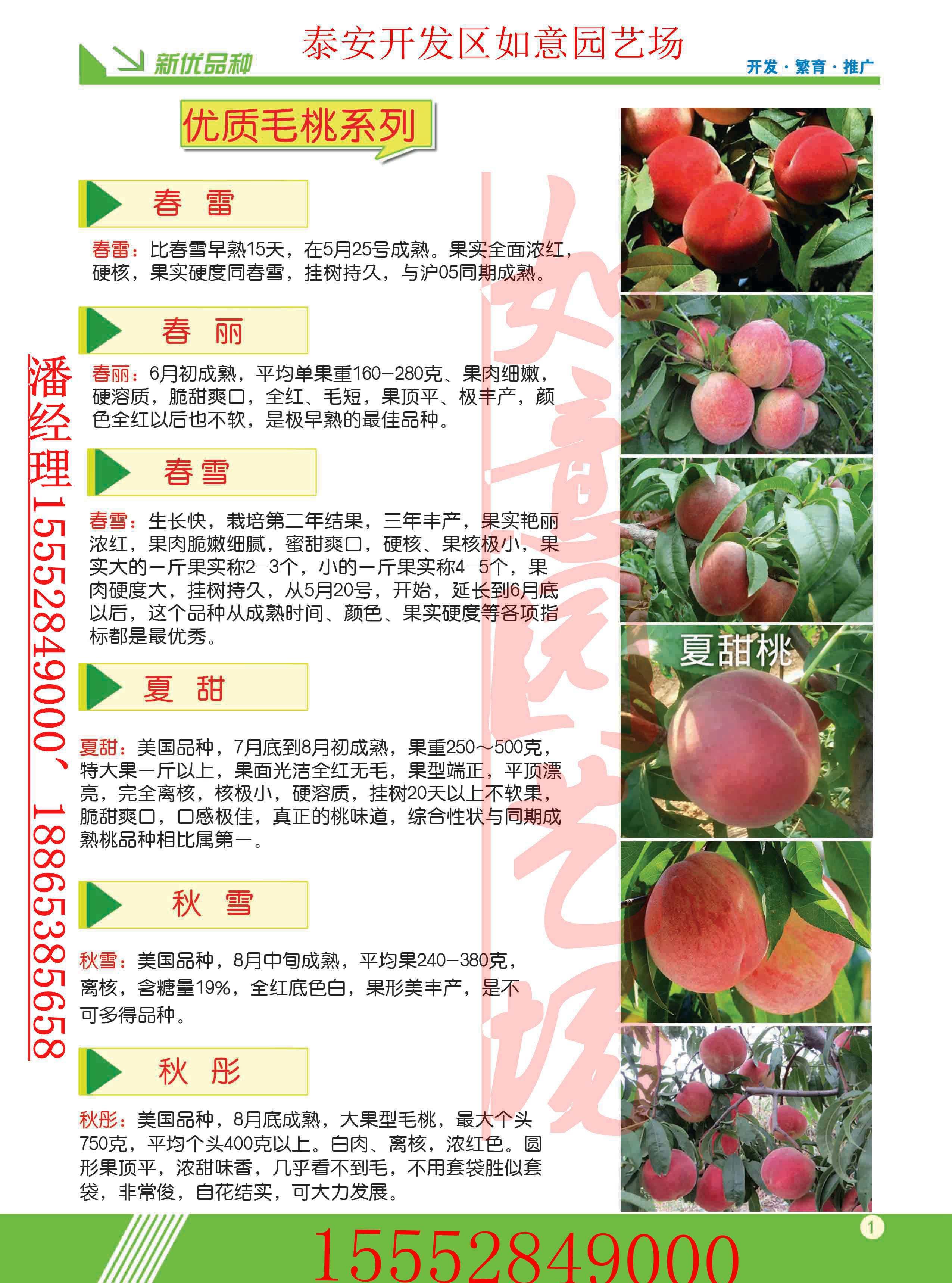 甘肃藤牧一号苹果苗基地