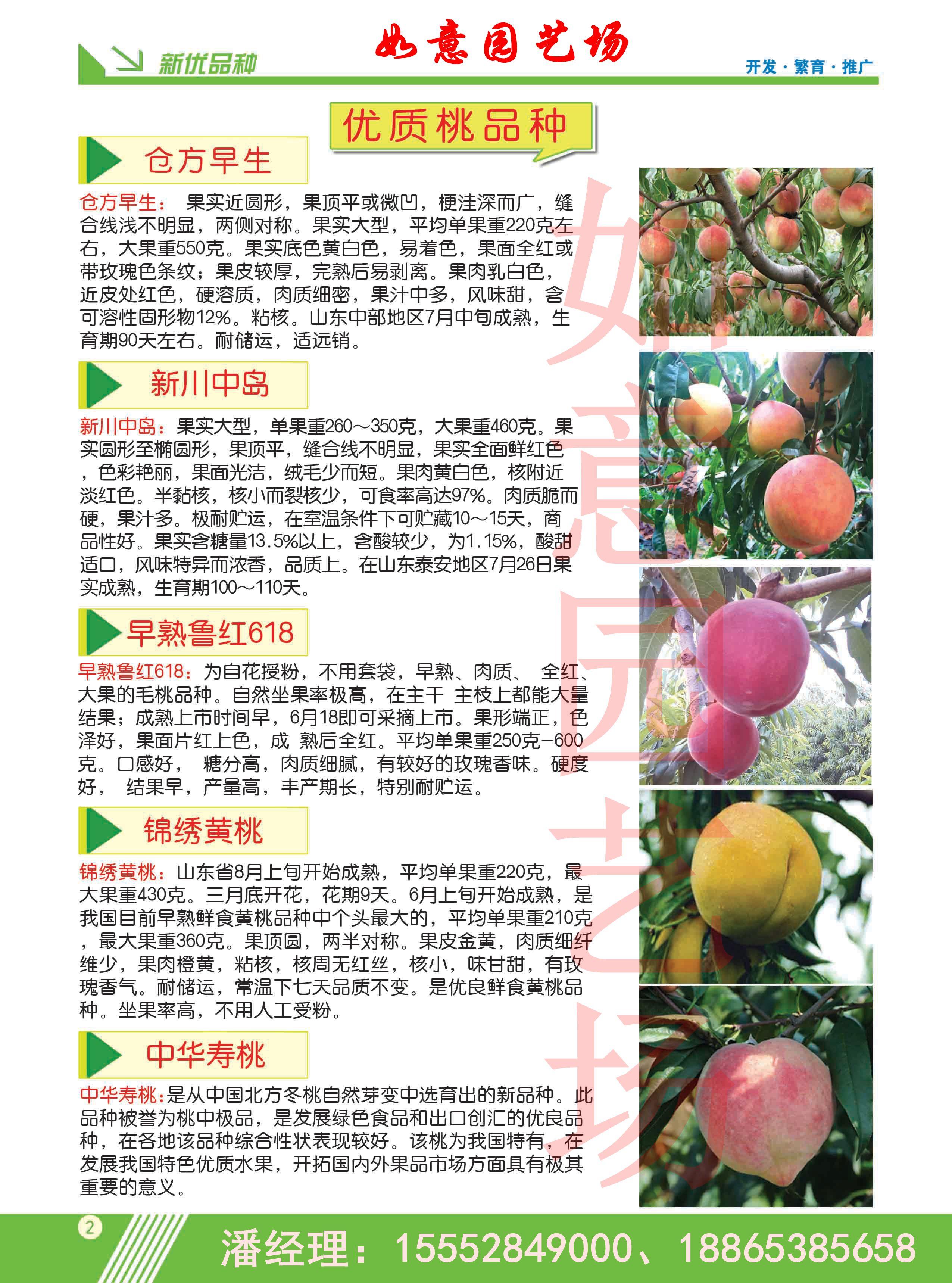 黑龙江日本大油栗板栗苗出售
