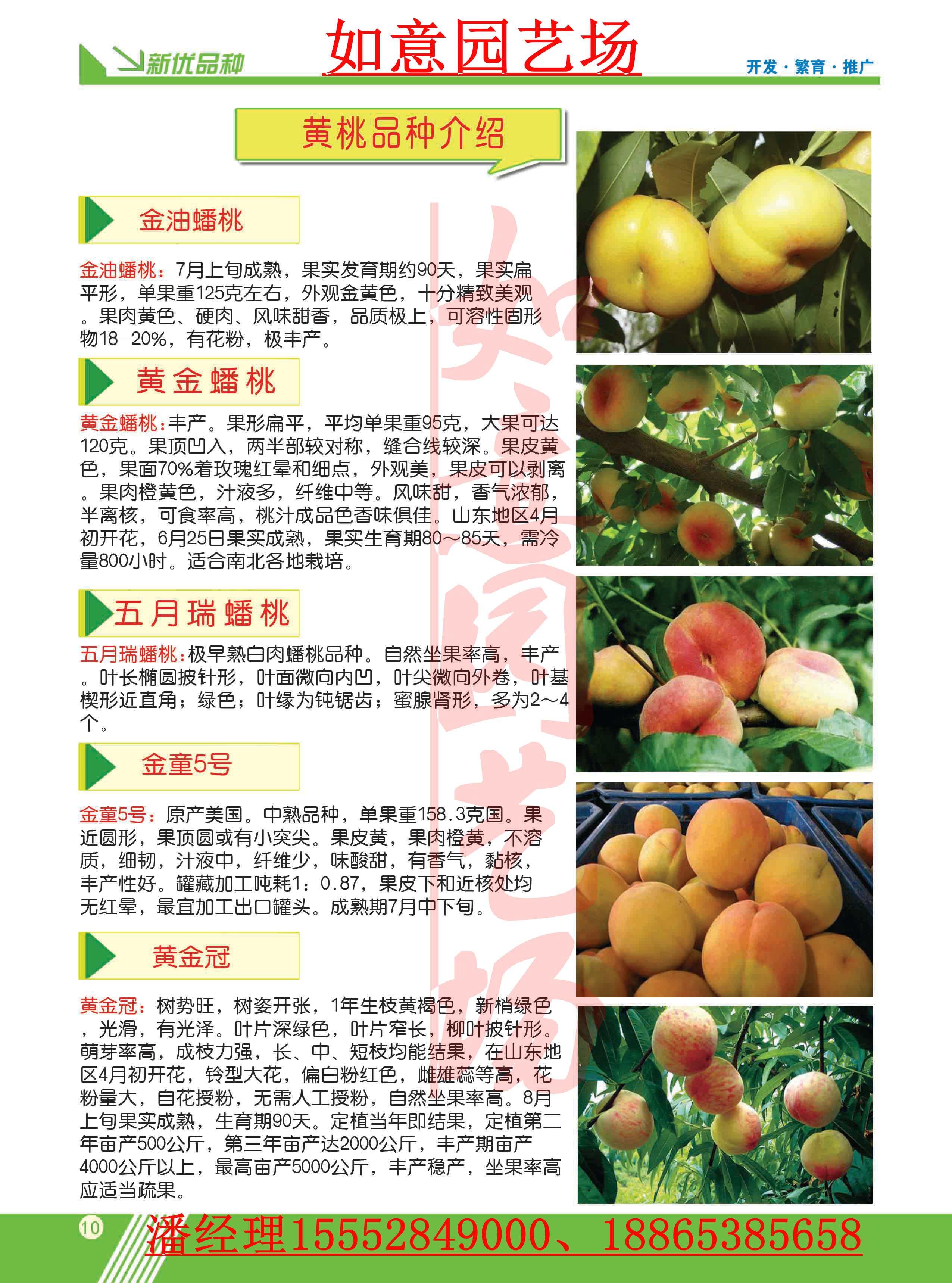 湖南黑珍珠樱桃苗种植方法