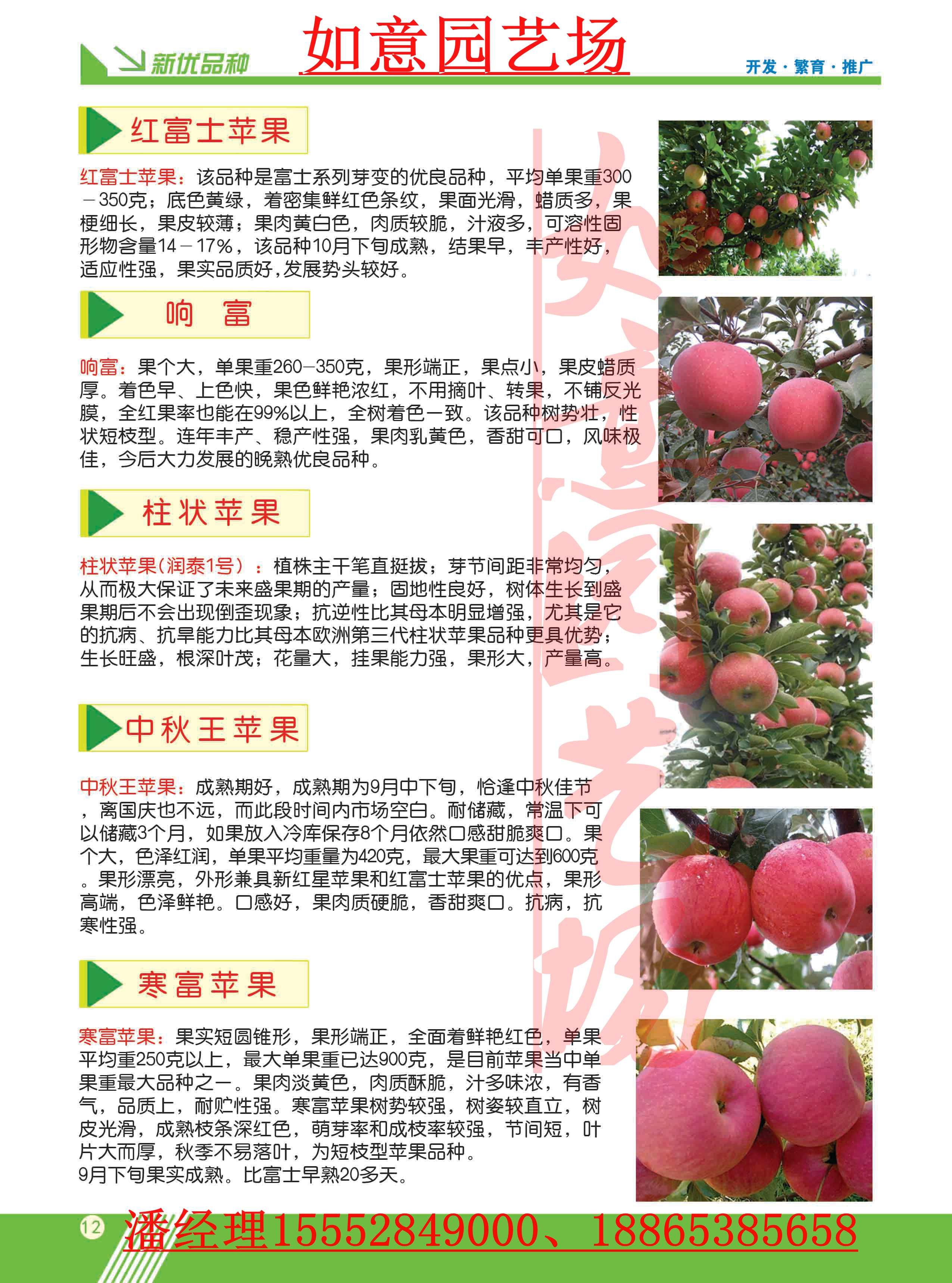 中卫桃树苗官网网站