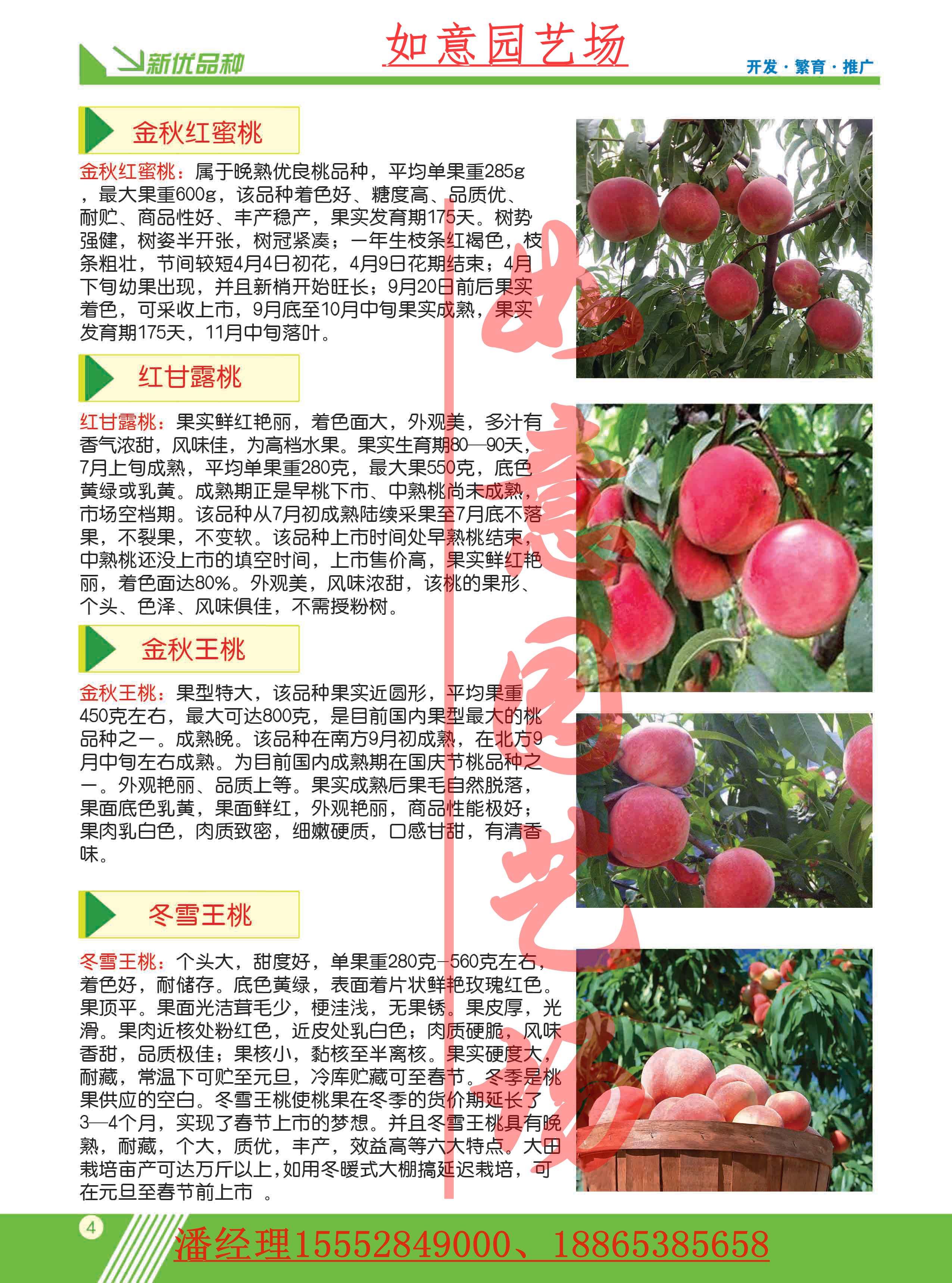 福建晚熟桃苗主要分类