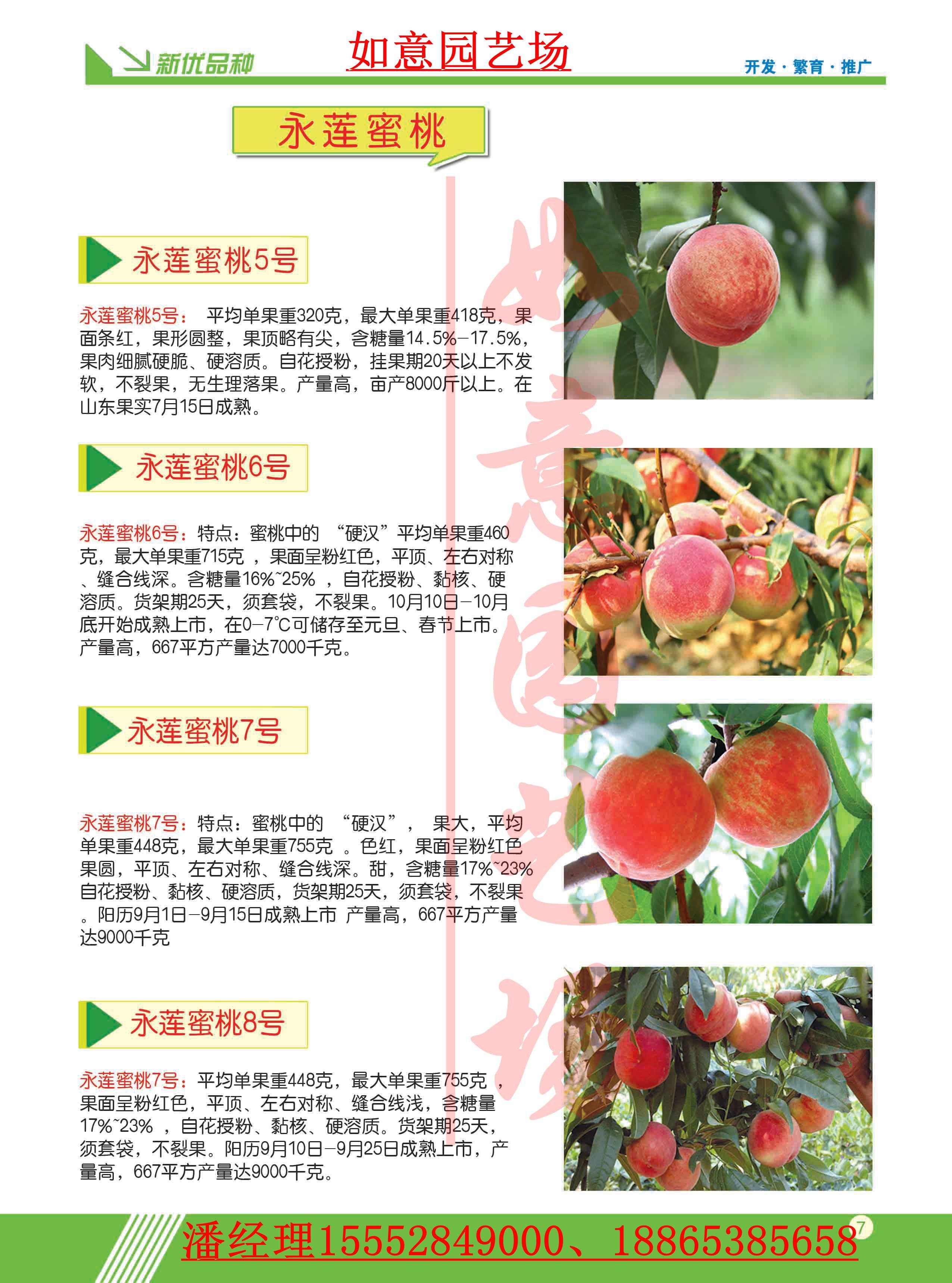 晋城晚熟桃苗供应商